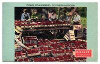 1950 Ozark Strawberries, Southern Missouri Postcard *5N(3)36