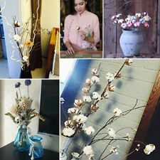 Cotton Dried Flowers Natural Plant Home Party Wedding Handmade Table Ornaments