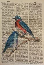 "Bluebirds on Old Text - 7 1/2"" X 10 3/4"" -Colored Ink  Original Ramfish Artist"