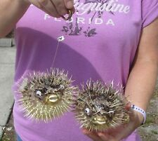 2 piece lot of 5 inch Porcupine Blowfish Puffer fish w/hanger taxidermy #39990
