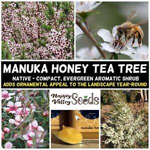 MANUKA HONEY TEA TREE 200+ Seeds Myrtle Medicinal NATIVE Leptospermum scoparium