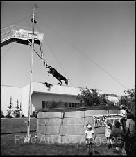 """Neal White Photo, """"Diving Horse""""  Side Show 1970s"""