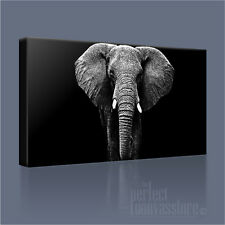 Elefante Africano moderno altamente decorativo Tela Art Print PICTURE ART Williams