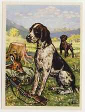 N°121 CHIEN D'ARRET DRAHTHAAR Wirehaired Pointer DOGS CHIENS IMAGE CARD 50/60s