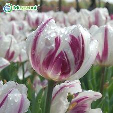24 COLORI PROFUMO Tulip semi di alta qualità fiore Semi Bonsai, più bella e C
