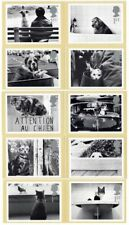 GB 2001  PHQ Cards Mint Set~Cats & Dogs~(10)~PHQ-228~UK Seller