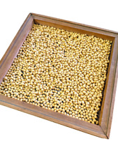 Clear Hilum!! SoyPro NON-GMO Soybeans for Soy Milk & Tofu 10 - 20 lbs.