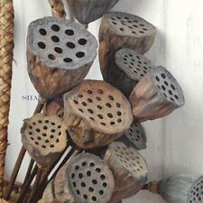Pack of 5 Dried Lotus Seed Pod Head Stem Natural Floral Home Garden Decor Retro