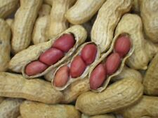 New Crop DW2017 NM Red Valencia Peanut Seeds Non-GMO Heirloom Nut Home Plant