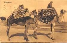 Egypt Chameaux Camels 1913