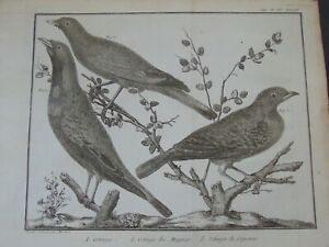 FIVE ANTIQUE 18th CENTURY BIRD ENGRAVINGS by F.N. MARTINET ca.1770