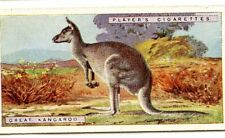 CHROMO NATURAL HISTORY JOHN PLAYER & SONS ANIMAL KANGAROO  format 6,5 x 3,5 cm