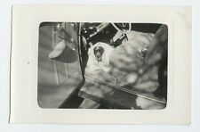 1930s Snapshot Dog Wrapped in Blanket on Car Floor