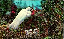 C42-8187, BIRD THEME OR BIRD TOPIC, POSTCARD.