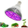 Lampada LED Grow Full Spectrum 80 W - LAMPADINA LUCE PER PIANTE