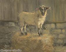 """King of The Bale, Wooly Sheep"" Debra Sepos original oil 8 x 10"" farmyard & barn"