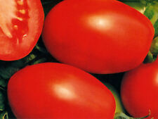 Tomato Rio Grande Large Fruit! Flavor is Excellent! A+ Canner! 35+ SEEDS