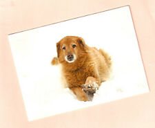 Golden Retriever Christmas Cards Pack of 10 Amid the Winter Snow