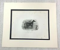 1843 Antik Gravierung Aufdruck Schwarz Arabian King William VI Royal Arab Pferd