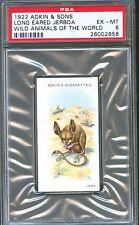 1922 Adkin & Sons LONG EARED JERBOA Wild Animals of the World Trade Card PSA 6