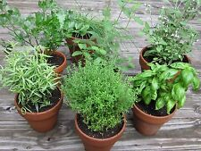 CULINARY HERB COLLECTION- 17 BEST SELLING SEED VARIETIES