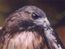 """""""Red Alert - Red Tailed Hawk"""" Carl Brenders Limited Edition Print"""
