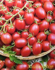 Tomate *Fürst Bourgeois* 10 Samen *Neue Ukrainische Sorte *Томат Князь буржуа