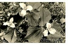 Trillium Plant-Wild Flower on Redwood Highway-RPPC-Vintage Real Photo Postcard
