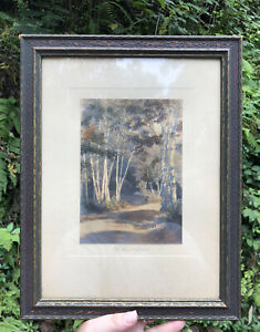 Antique Art Hand Tinged Photograph WALLACE NUTTING? The BIRCH Woods Landscape