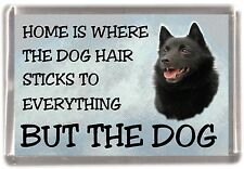 "Schipperke Dog Fridge Magnet ""Home is Where"" Design by Starprint"