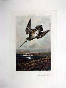 Archibald Thorburn - Drumming Snipe - Hand Colored (Restrike Etching) game bird
