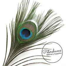Natural Green Single Peacock Eye Feathers (26-30cm) for Millinery & Hat Making