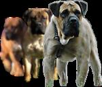 3 Dog Auction & Sales
