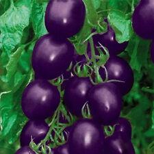 1Bag 20 Seeds Purple Cherry Tomato Organic Fruit Vegetable Plant