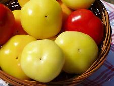 Ungarische Apfelpaprika - Schärf - 10+ Samen - Saatgut - Almapaprika
