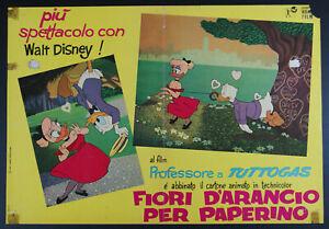 fotobusta cartoon FIORI D'ARANCIO PER PAPERINO abbinato a PROFESSORE... 1963