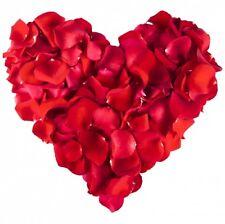 500 rote Rosenblätter Deko Blüten Rosen Blumen Hochzeit Party Streudeko Tisch
