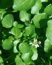 Organic Pond Plants 6Variety Value Pack