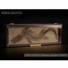 "Rebor Oddities Fossil Studies (Tylosaurus proriger) ""Charon"""