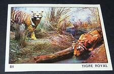 N°81 TIGRE ROYAL PANINI 1970 TOUS LES ANIMAUX EDITIONS DE LA TOUR