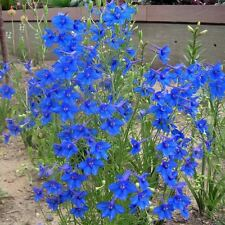 DELPHINIUM Larkspur Blue Butterfly Seeds (F 397)
