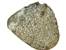 Jurassic Oxford Clay Ophthalmosaurus ichthyosaur rib thin section Peterborough A