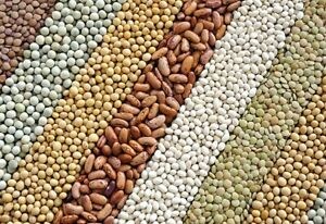 SURVIVAL seeds  12 varieties  self sufficiency prepper Vegetable STAPLE CROPS!!