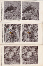 Lot de 53 Carte Stéréo Stereoview The Kearton  Stereoscopic nature studies