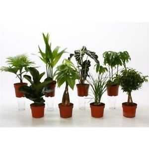 Zimmerpflanzenmix -- Büropflanzen Grünpflanzen Mix Blumen Blumenversand