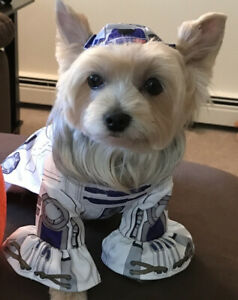 Lucas Films Star Wars R2D2 Dog / Cat Rubie's Halloween COSTUME Medium 11-20 Lbs