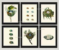 Unframed Bird Nest Eggs Wall Art Print Set of 6 Antique Blue Garden Home Decor