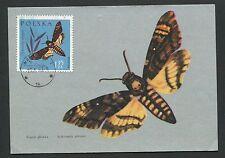 POLEN MK 1963 INSEKTEN SCHMETTERLINGE MAXIMUMKARTE MAXIMUM CARD MC CM d6052