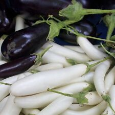 15 White Long Eggplant Seed Solsnum Melongena Garden Planting Vegetable Seeds