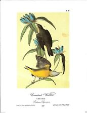 Connecticut Warbler Vintage Bird Print by John James Audubon ABONA107